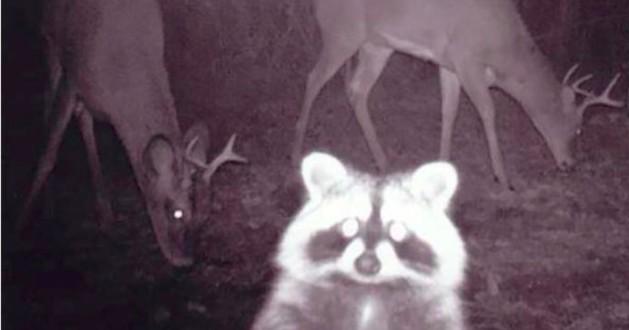 Funny night animals.jpg